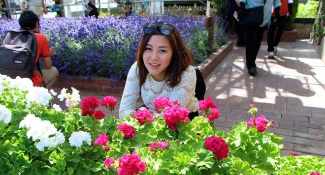Flowers at Farm Tomita