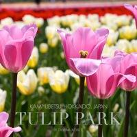 Kamiyubetsu Tulip Park, Yubetsu, Hokkaido, Japan (Gallery)