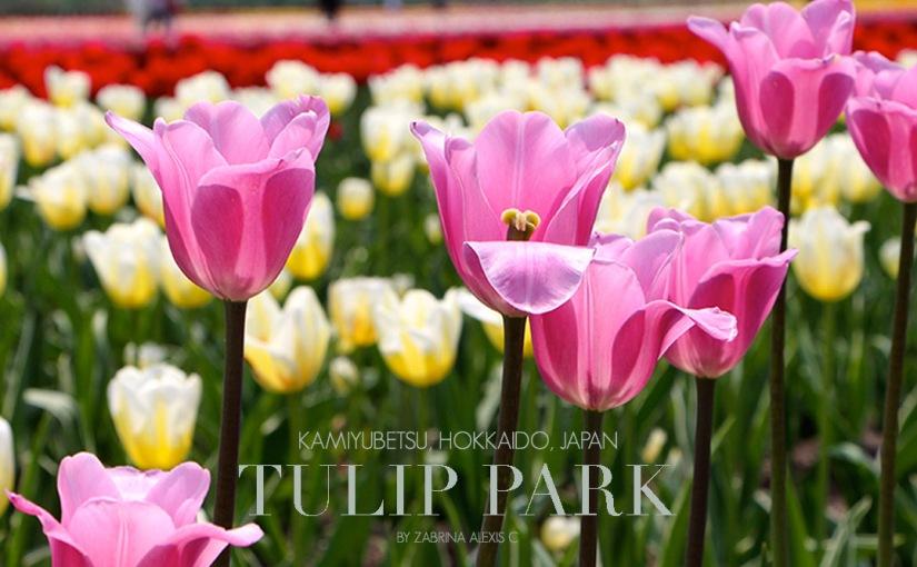 Kamiyubetsu Tulip Park, Yubetsu, Hokkaido, Japan(Gallery)
