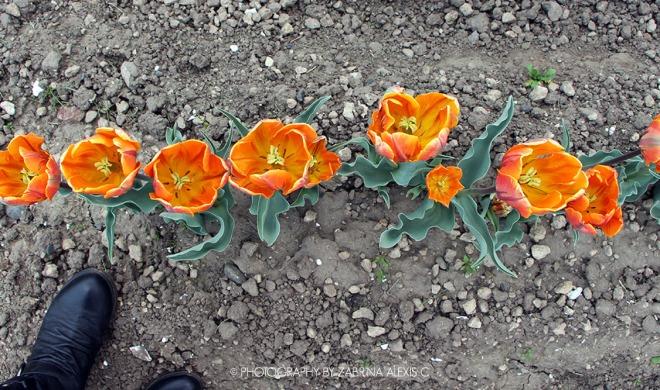 Kamiyubetsu Tulip Park Mombetsu Hokkaido Japan Travel Diary