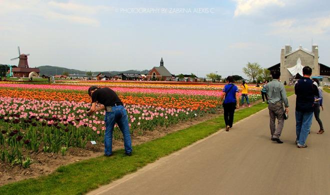 Kamiyubetsu Tulip Flower Park Hokkaido Japan Travel Blog