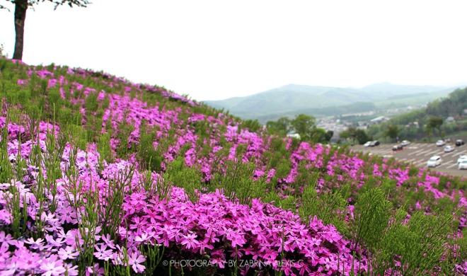 Takinoue Pink Moss Park Hokkaido Asahikawa Japan Travel Blog Sights