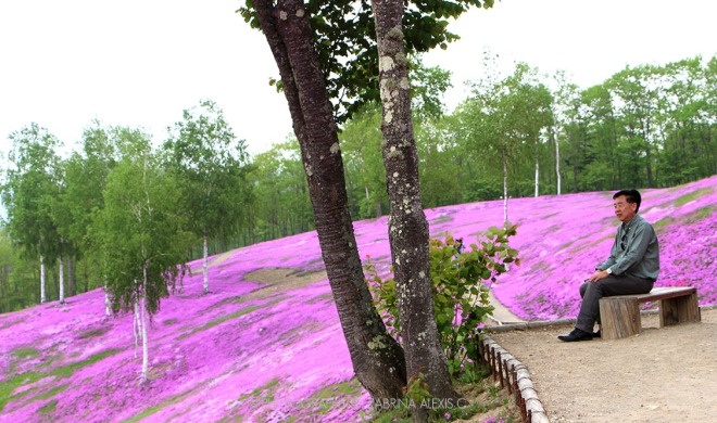 Takinoue Pink Moss Park Hokkaido Japan Travel Blog Top Sights