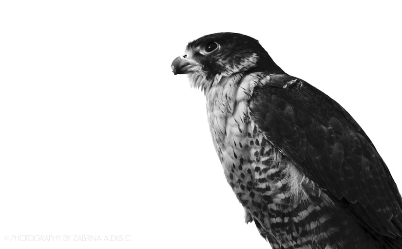 Prose by Photography: The Falcon sees
